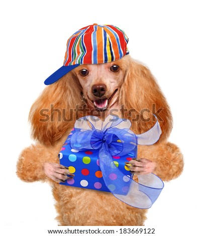 Dog with gift box - stock photo