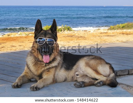 Dog with glasses lying at beach - stock photo