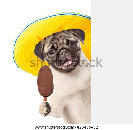 Dog with hat holding ice cream and peeking from behind empty board. isolated on white background - stock photo