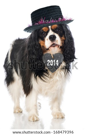 Dog with heart in mouth - stock photo