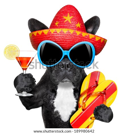 dog with martini glass and mexican hat - stock photo