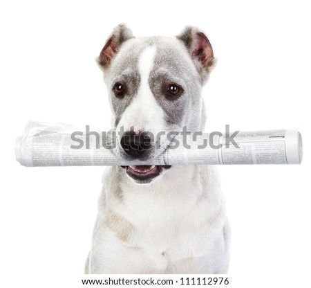 dog with newspaper. isolated on white background - stock photo