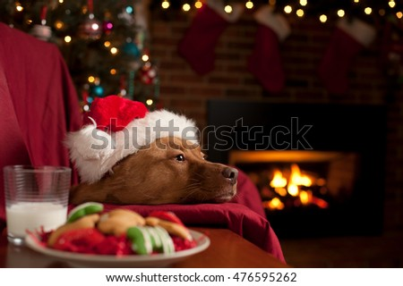 Dog with plate of cookies and glass of milk waiting for santa by the fireplace.