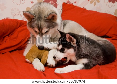 dog with puppy - stock photo