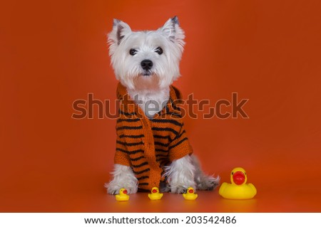 dog with rubber ducks - stock photo