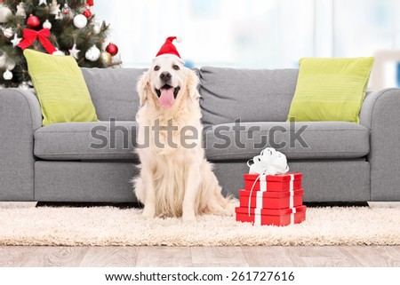 Dog with Santa hat sitting by a sofa indoors - stock photo