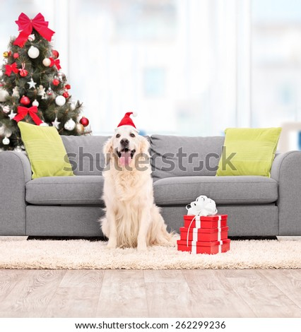 Dog with Santa hat sitting by a sofa indoors shot with tilt and shift lens - stock photo