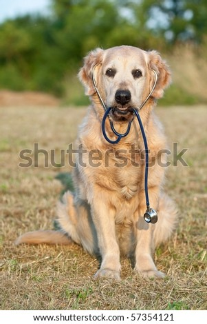 Dog with stethoscope on garden - stock photo