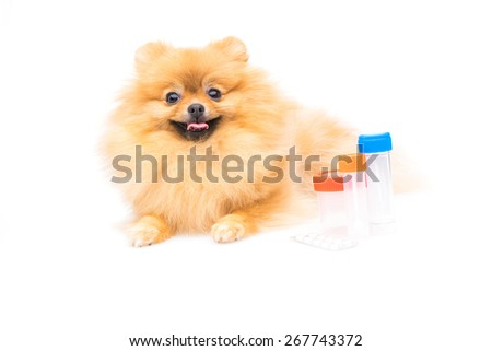 Dog with tablets - stock photo