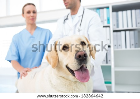 Dog with veterinarians in clinic - stock photo