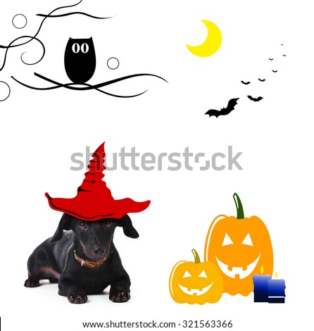 Dog with witch hat for halloween, isolated on white - stock photo