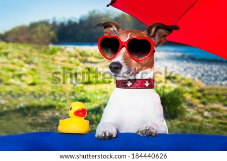 dog with yellow duck and umbrella on summer holidays - stock photo