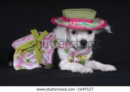 Doggie Dress-Up - stock photo