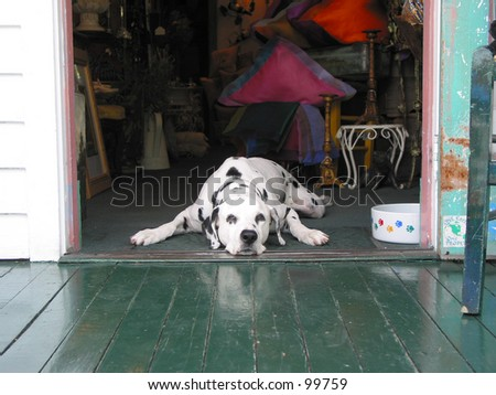 doggy in a doorway