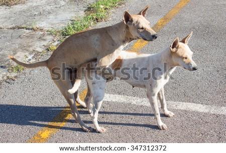 doggy style - stock photo