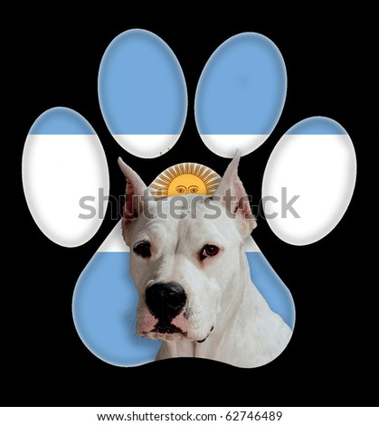 Dogo argentino, Dog portrait with a background of Argentina flag in paw print