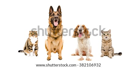 Dogs and cats sitting together isolated on white background - stock photo