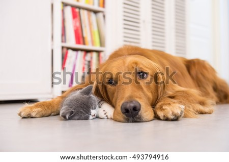 Dogs and cats, taken indoors