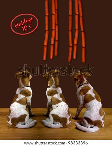Dogs and Hot Dogs. - stock photo