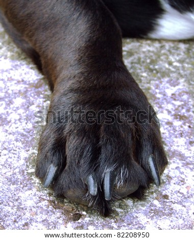 Dogs Foot / Paw - stock photo
