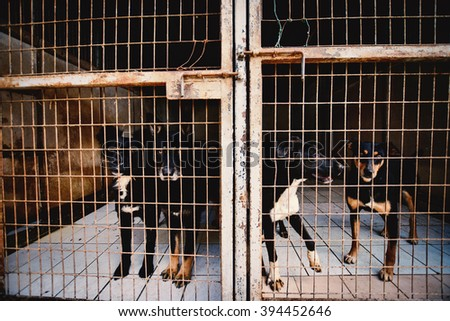 Dogs in animal shelter. - stock photo