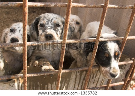 dogs in captivity - stock photo