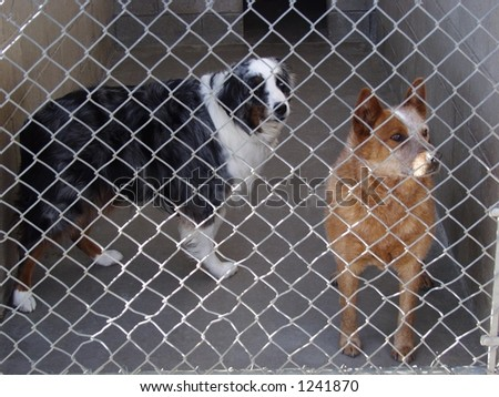 Dogs in the pound - stock photo
