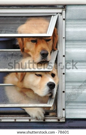 Dogs in window - stock photo