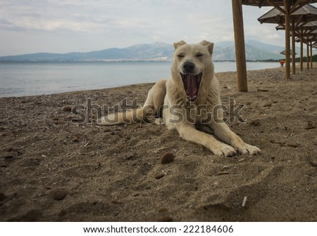 Dogs on the beach, Schinias, Greece