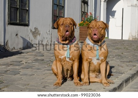 Dogs on the old European street - stock photo