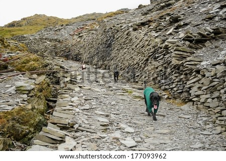 Dogs on the Old Man of Coniston in the The Lake District - stock photo