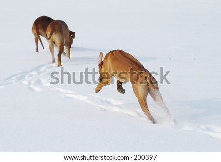 Dogs on the snow - stock photo