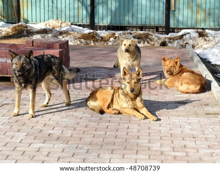 Dogs on the street - stock photo