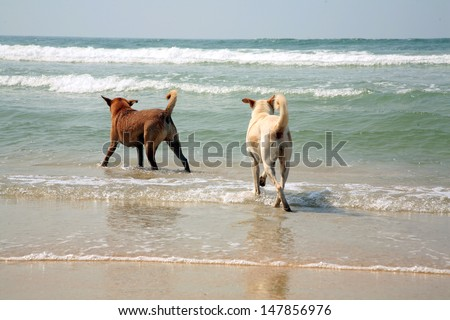 Dogs playing in water, India beach