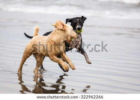 Dogs Running and Playing - stock photo