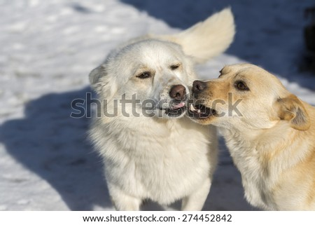 dogs say something to each other - stock photo