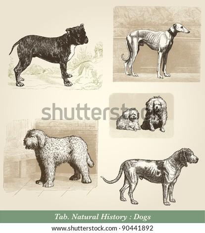 "Dogs - Vintage engraved illustration - ""Cent récits d'histoire naturelle"" by C.Delon published in 1889 France - stock photo"