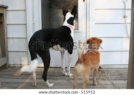 Dogs waiting to come in - stock photo