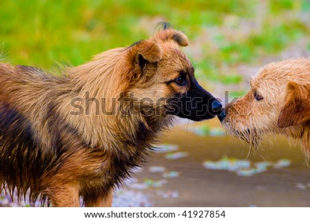 dogs without names walking on green grass - stock photo