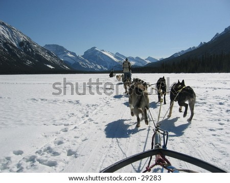 Dogsledding in the Canadian Rockies. - stock photo