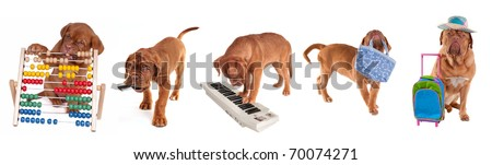 Dogue De Bordeaux Puppies in different occupations, isolated on white background - stock photo