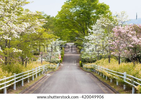 Dogwood and road - stock photo