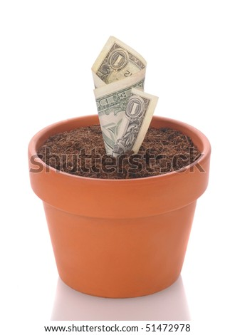 Dollar bill in a flower pot. Bill looks like it is a seeding beginning to sprout. Vertical format isolated on white with reflection. - stock photo