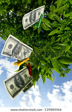 Dollar currency hanging on a green tree/Money tree - stock photo