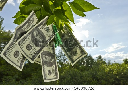 Dollar currency hanging on green tree leafs/Hanging money - stock photo