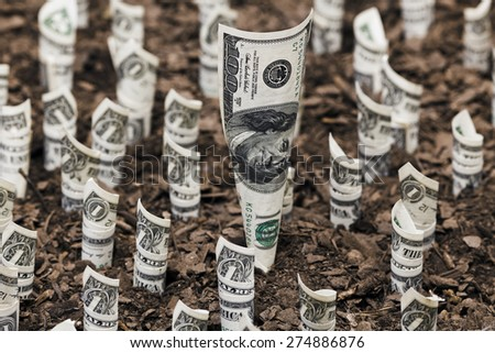 Dollar plants growing Finance and investment concepts - stock photo