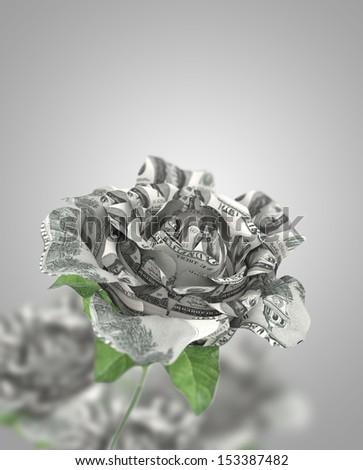 dollar rose represent  money love economy  - stock photo