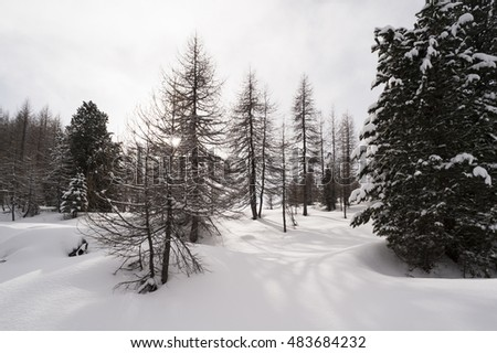 Dolomites, winter view of a wood