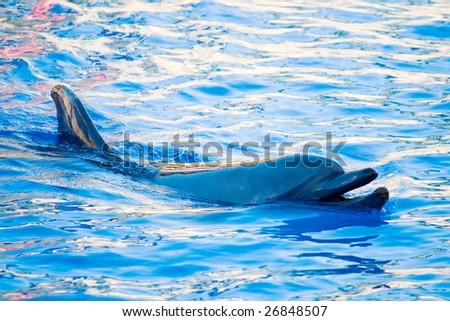 dolphin - stock photo