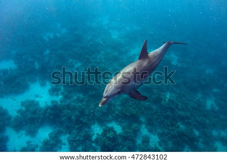 Dolphin and Coral